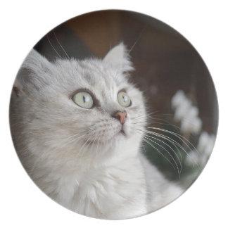 Animals Cat Feline Plate
