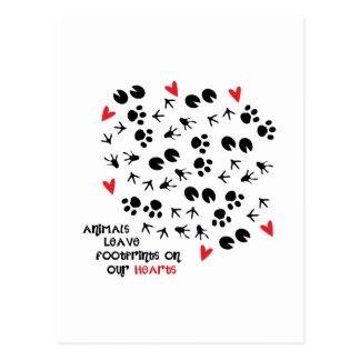 Animals Leave Footprints On Postcard