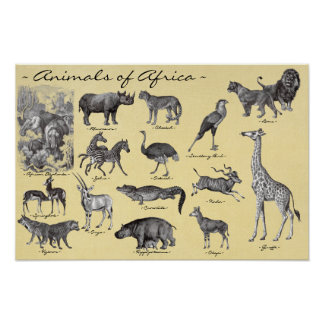 Animals of Africa Poster