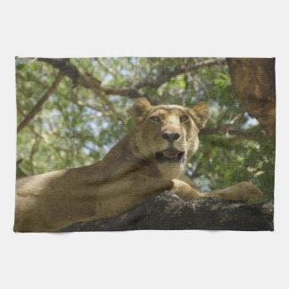 Animals > Wild > Cats > Lions Kitchen Towel