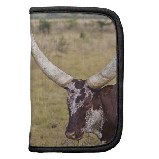 Ankole-Watusi breed of cattle Organizer