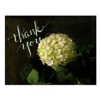 Annabelle  Hydrangea Thank-you Postcard