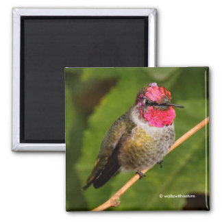Anna's Hummingbird and His Raspberry-Dipped Head Square Magnet