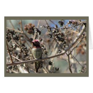 Anna's Hummingbird Blank Card