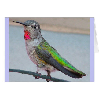 Anna's hummingbird - Card