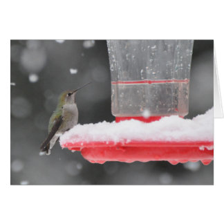 Anna's Hummingbird in the Snow Card