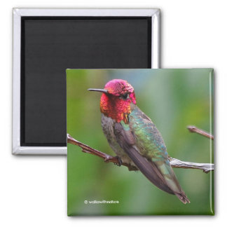 Anna's Hummingbird: This King Wears a Pink Crown Square Magnet