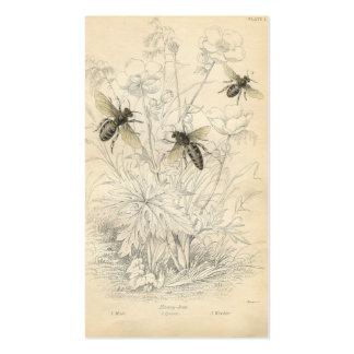 Annonce vintage, abeilles carte de visite standard
