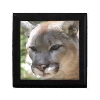 Annoyed Mountain Lion Gift Box