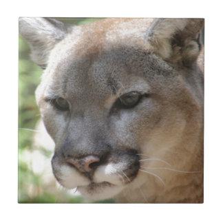 Annoyed Mountain Lion Tile
