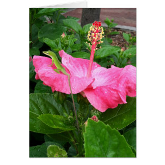 Anole Lizard On Pink Hibiscus Photograph Card