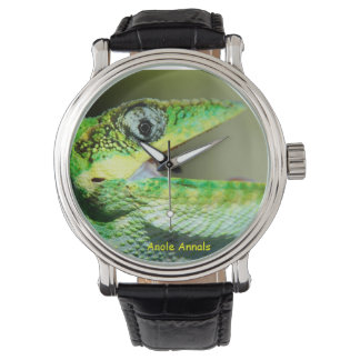 Anole Watch: Anolis equestris Watch