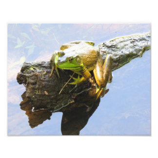 Another Frog on a Log Photo Print