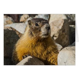 Another Marmot Portrait Card