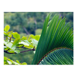 Another Palm leaf in rainforest of Indonesia. Postcard