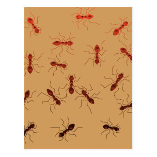 Ant antics. postcard
