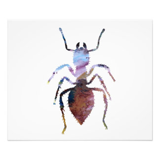 Ant art photo print