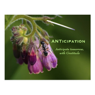 Ant & Flower Gratitude Motivational Postcards