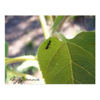 Ant on Leaf Postcard