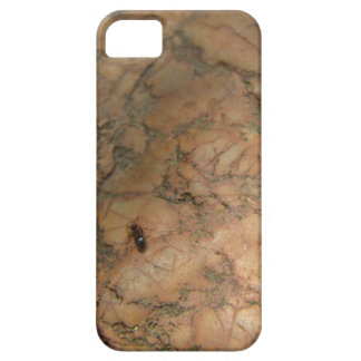 Ant on Rock iPhone5 Case