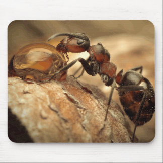 Ant & Water Drop Fine Art Mouse Pad