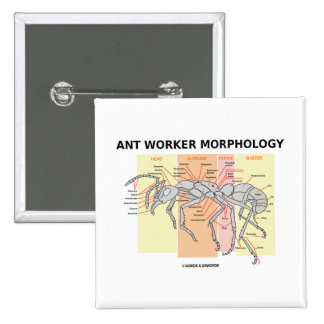 Ant Worker Morphology 2 Inch Square Button