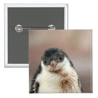 Antarctic 2 Inch Square Button