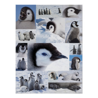 Antarctic Emperor Penguin Chicks Photo Collage Poster