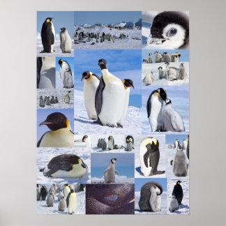 Antarctic Emperor Penguin Collage Poster