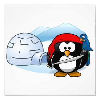 Antarctic Pitate Penguin Photo Art