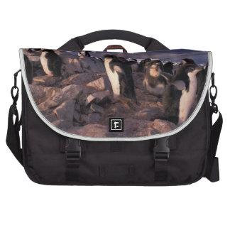 Antarctica, Adelie penguin chicks Laptop Bag