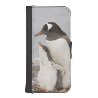 Antarctica, Aitcho Island. Gentoo penguin chick iPhone SE/5/5s Wallet Case