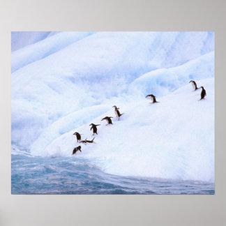 Antarctica, Antarctic Peninsula. Chinstrap Poster