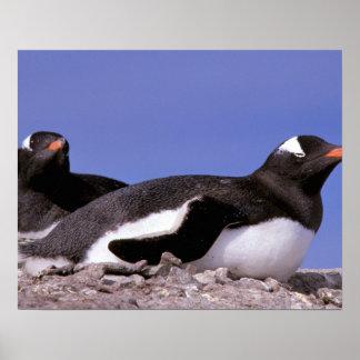 Antarctica, Antarctic Peninsula, Peterman Poster