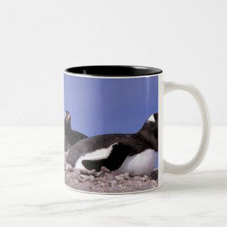 Antarctica, Antarctic Peninsula, Peterman Two-Tone Coffee Mug