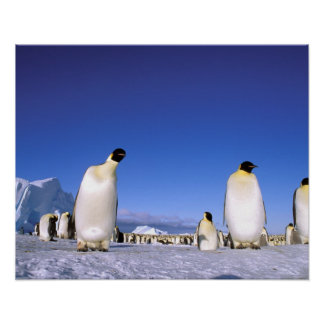 Antarctica, Antarctic Peninsula, Weddell Sea, 3 Poster