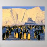 Antarctica, Antarctic Peninsula, Weddell Sea, 4 Poster