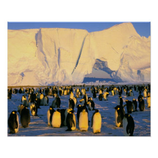 Antarctica, Antarctic Peninsula, Weddell Sea, 4 Poster