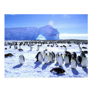 Antarctica, Antarctic Peninsula, Weddell Sea, 5 Postcard