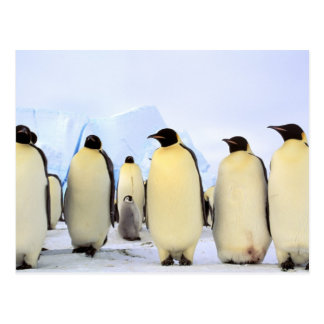 Antarctica, Antarctic Peninsula, Weddell Sea, Postcard