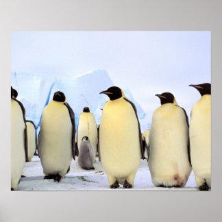 Antarctica, Antarctic Peninsula, Weddell Sea, Poster