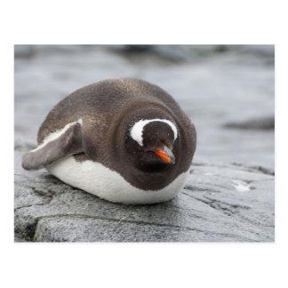 Antarctica, Antarctic Penninsula. Petermann Postcard