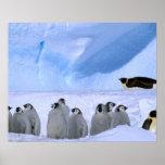 Antarctica, Australian Antarctic Territory, Cape Poster