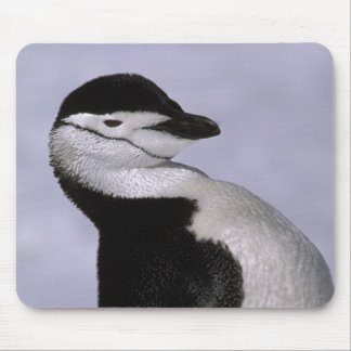 Antarctica. Chinstrap penguin Mouse Pad