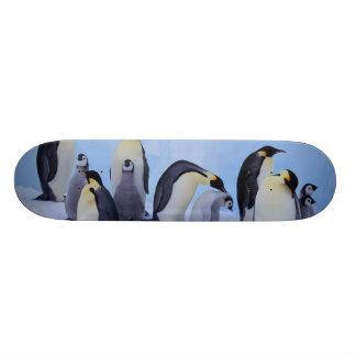 Antarctica, Emporer Penguin ((Aptenodytes Custom Skate Board