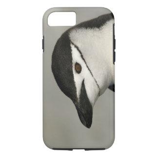 Antarctica, Half Moon Island. Close-up of adult iPhone 7 Case
