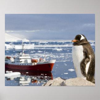 Antarctica, Neko Cove (Harbour). Gentoo penguin Poster