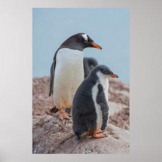 Antarctica. Neko Harbor. Gentoo Penguin 3 Poster