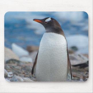 Antarctica. Neko Harbor. Gentoo Penguin Mouse Pad