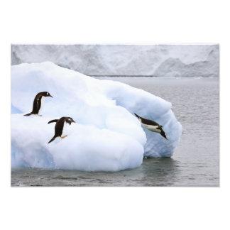 Antarctica, Neko Harbor. One gentoo penguin Photographic Print